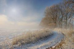 有雾和冷淡的冬天早晨 库存图片