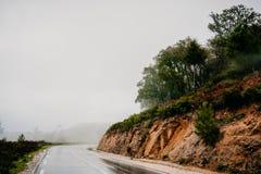 有雾和多雨森林公路 免版税库存照片