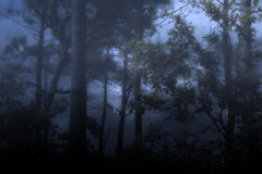 有雾和黑暗的wooids 库存图片