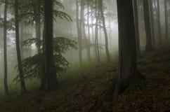 有雾和绿色叶子的狂放的森林 免版税库存照片