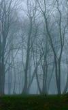 有雾和绿色青苔的美丽的奥秘森林在地面上 免版税库存图片