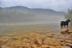 有雾在山河Kurdzhips和狗rottweiler 免版税库存图片