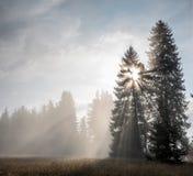 有雾在森林里 库存照片