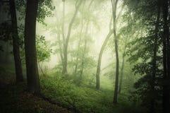 有雾的不可思议的绿色森林在夏天 免版税库存图片