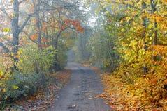 有雾的乡下公路 库存照片