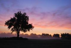 有雾的俄克拉何马日出 库存照片