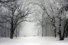 有雾的公园冬天 免版税库存图片