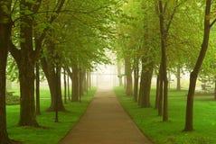 有雾的公园 免版税图库摄影