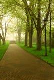 有雾的公园 免版税库存照片