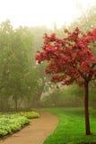 有雾的公园 免版税库存图片