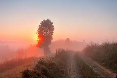 有雾的农村场面 土路在有薄雾的早晨 免版税库存图片