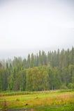 有雾的农村风景 免版税图库摄影