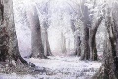 有雾的冬天和雪风暴solf和blure焦点 免版税库存照片