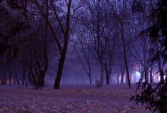 有雾的冬天夜在公园 库存图片