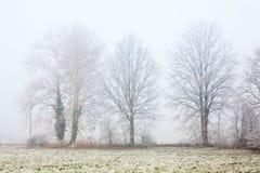 有雾的冬天树 库存照片