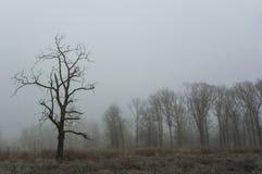 有雾的冬天树 图库摄影