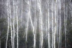 有雾的冬天森林背景 库存照片