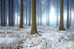 有雾的冬天森林 免版税库存图片