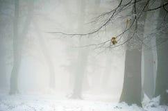 有雾的冬天森林 免版税库存照片