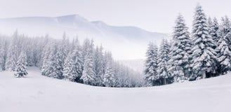 有雾的冬天横向的全景 免版税库存图片