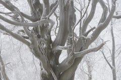有雾的冬天横向 免版税图库摄影