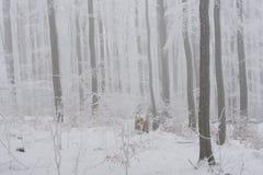有雾的冬天横向 图库摄影