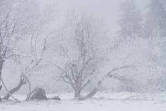 有雾的冬天横向 免版税库存图片