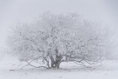 有雾的冬天横向 免版税库存照片