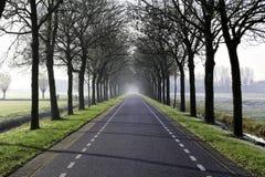 有雾的冬天路 库存图片