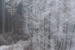 有雾的冬天风景-冷淡的树在多雪的森林里 免版税库存照片