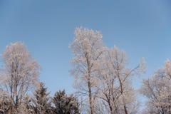 有雾的冬天风景-冷淡的树在多雪的森林里 库存照片