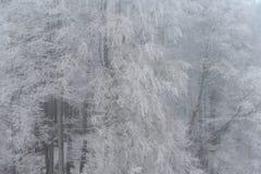 有雾的冬天风景-冷淡的树在多雪的森林里 免版税图库摄影