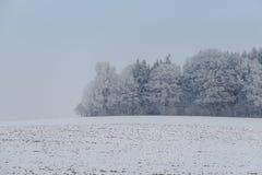 有雾的冬天风景-冷淡的树在多雪的森林里 库存图片
