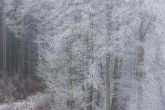 有雾的冬天风景-冷淡的树在多雪的森林里 免版税库存图片