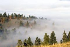有雾的土地 免版税库存图片