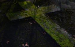 有雾的坟园在晚上 月光的老鬼的公墓通过树 免版税库存图片