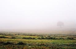 有雾的域 免版税图库摄影
