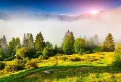 有雾的夏天早晨在特里格拉夫峰国家公园,在Bohi附近 免版税库存图片