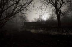 有雾的夜神秘的森林 免版税库存照片