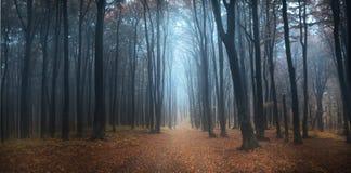 有雾的天到在秋天期间的森林里 免版税库存照片