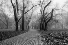 有雾的天在公园 免版税库存照片