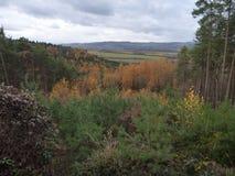 有雾的天气的五颜六色的森林在11月 免版税库存照片