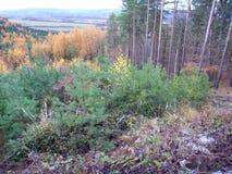 有雾的天气的五颜六色的森林在11月 免版税库存图片