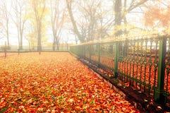 有雾的天气的-五颜六色的秋天自然风景秋天公园 库存照片