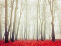 有雾的天气的-秋天秋天有雾的公园风景视图秋天公园  库存图片