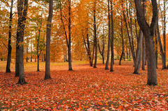有雾的天气的-美好的秋天风景秋天公园 免版税库存图片