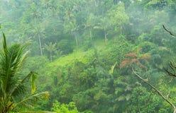 有雾的密林巴厘岛,印度尼西亚 库存照片