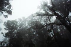 有雾的密林 免版税库存照片