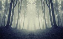 有雾的对称黑暗的森林 库存图片图片