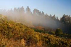有雾的小山 库存图片